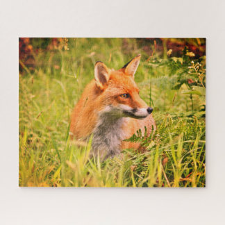 Lovely Vixen - Red Fox in Scottish Woodland Jigsaw Puzzle