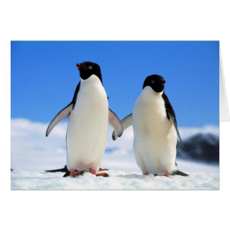 lovers penguins card