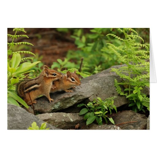 Loving Baby Chipmunk Siblings Card