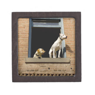 Low angle view of dogs in open window of brick premium keepsake boxes