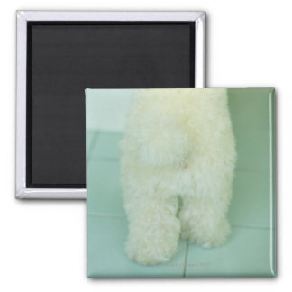 Low section view of a miniature poodle magnet