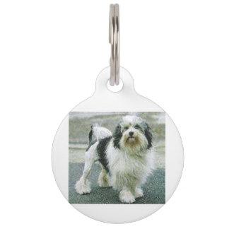 lowchen full 3 pet tag