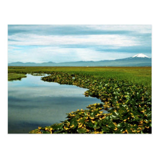 Lower Klamath National Wildlife Refuge Postcard
