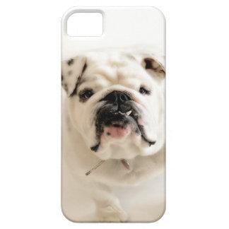 Loyal White Bulldog Photograph iPhone 5 Covers