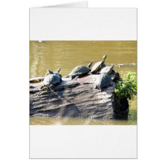LSU Turtles.JPG Card