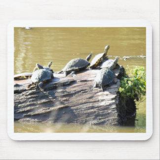 LSU Turtles.JPG Mouse Pad