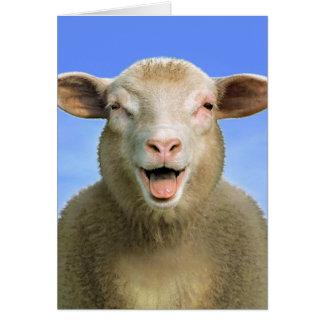 Lucie the sheep card