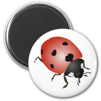 Luck beetle 6 cm round magnet