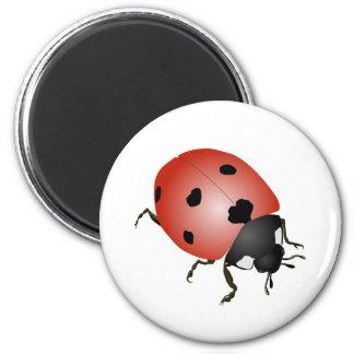 Luck beetle magnet