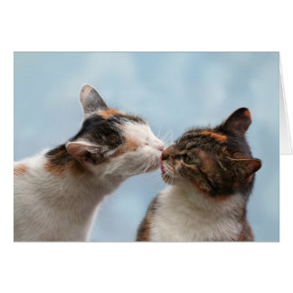 Luck cats cats kiss themselves, cat kiss card