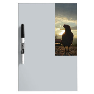 Lucky chicken 01.3 dry erase board