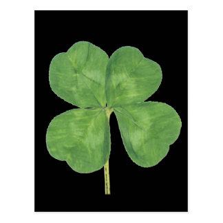 Lucky Four-Leaf Clover Shamrock Postcard