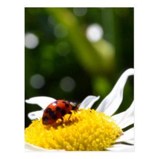 Lucky Ladybug Postcard