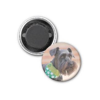 Lucky Miniature Schnauzer Magnet