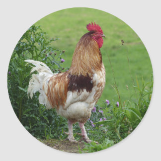 Lucky rooster round sticker