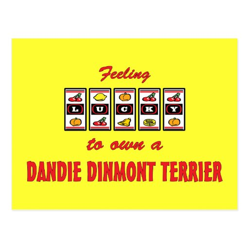 Lucky to Own a Dandie Dinmont Terrier Fun Design Post Cards