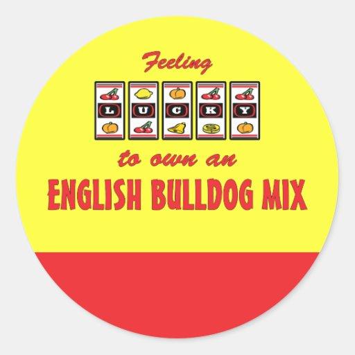 Lucky to Own an English Bulldog Mix Fun Dog Design Stickers