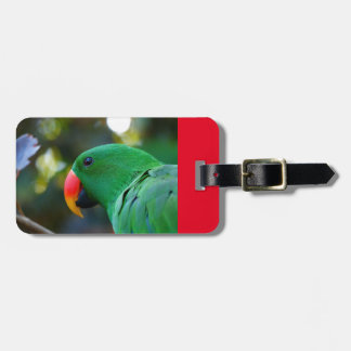 Luggage Tag with Eclectus Parrot