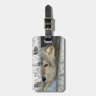 luggage tag with photo of gray wolf in birch trees
