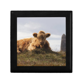 Luing cow on the Isle of Islay, Scotland Gift Box