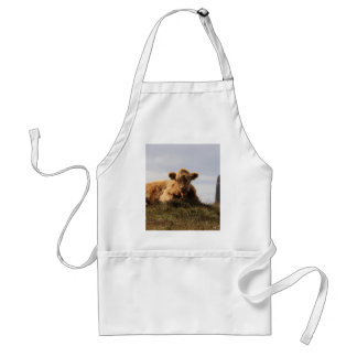 Luing cow on the Isle of Islay, Scotland Standard Apron