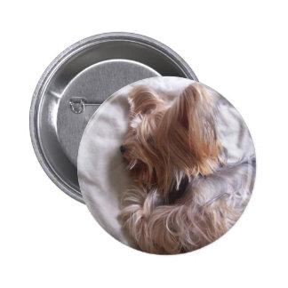 Luke dog botons