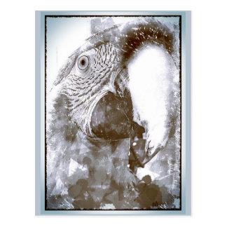 Lulu Macaw Grunge Sketch Post Card