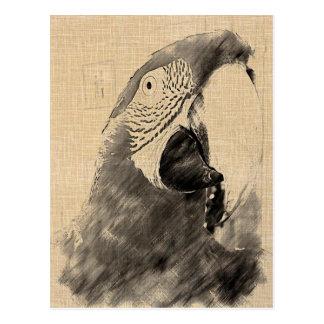 Lulu Macaw Sketch Postcard