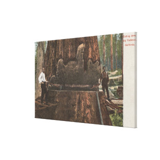 Lumberjacks Cutting Down a Redwood Tree Gallery Wrapped Canvas