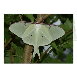 Luna moth card