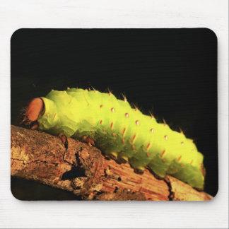 Luna Moth Caterpillar Mouse Pad
