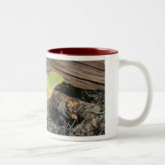 Luna Moth Coffee Mug