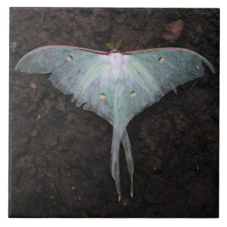 luna moth nature butterfly fairy fantasy dream large square tile