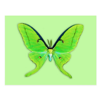 Luna moth on a pale green background postcard