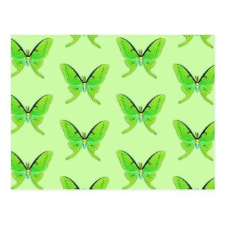Luna moth on a pale green background postcards