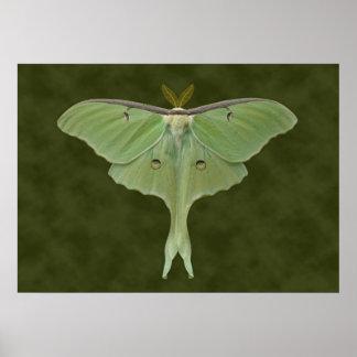 Luna Moth Poster. Poster