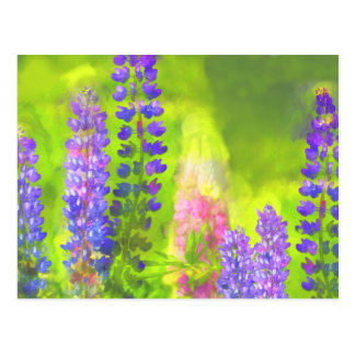 Lupines Postcard
