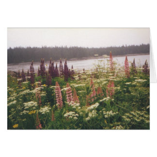 """Lupines, Vinalhaven, Maine"" Card"