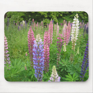 Lupins at Winkworth Arboretum, Surrey Mouse Pad