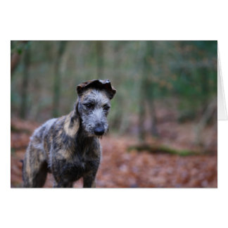 Lurcher in woodland greetings card