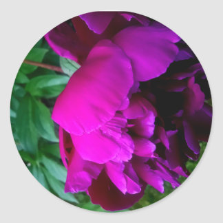 Lush and lovely purple roses round sticker