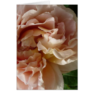 Lush Blush Rose notecard