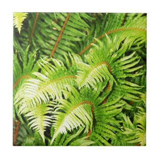 Lush green fern leaves ceramic tile