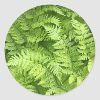 Lush Green Fern Stickers
