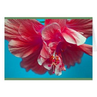 Lush hibiscus card