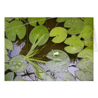 Lush Lilypads Card