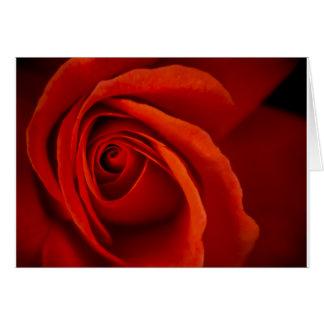 Lush Romance Greeting Card - 5x7