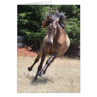 Lusitano Horse at Liberty Card