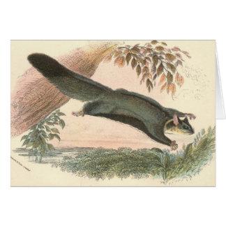 Lydekker - Squirrel Flying Phalanger/Possum Card