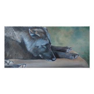 Lying Black Wolf Art Photo Print